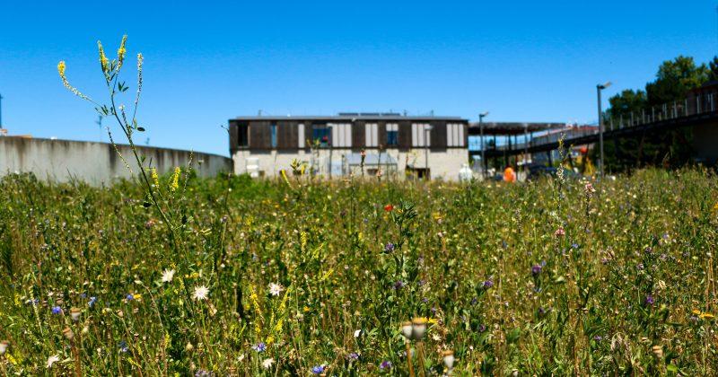 Visiter la station de traitement des eaux usées à Fleurieu/Neuville-sur-Saône